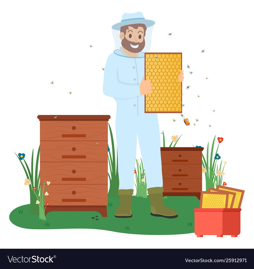 Beekeeper with Bees, Honey Making Business Vector
